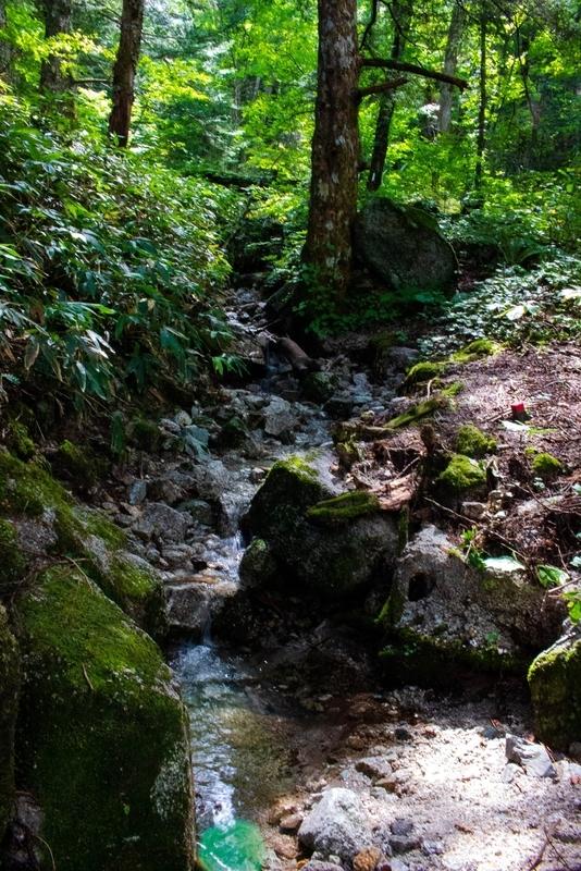 森から水が注ぎ込む様子の写真