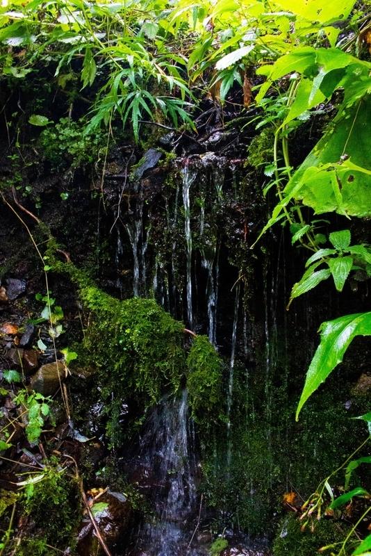 苔と流れ落ちる水