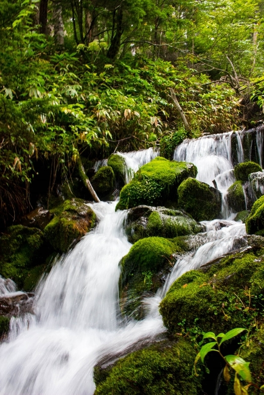 苔むした岩々と水の流れ