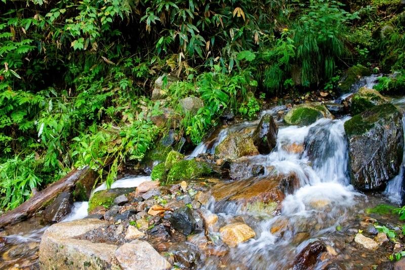 森の奥から滾々と水が流れ出す様子