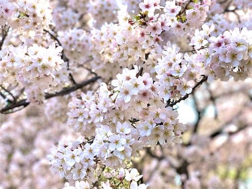 f:id:chihi_u:20200322212506j:image