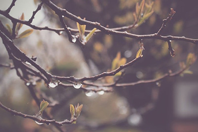 梅雨の日の木の枝