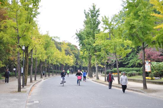 大阪城公園のイチョウ並木園