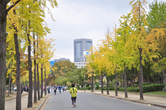 大阪城公園のイチョウ並木