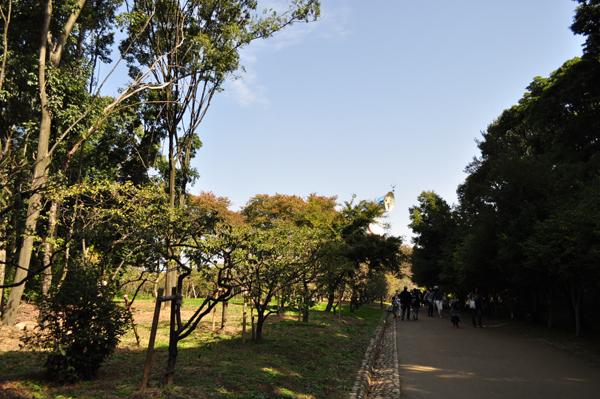 自然文化園内