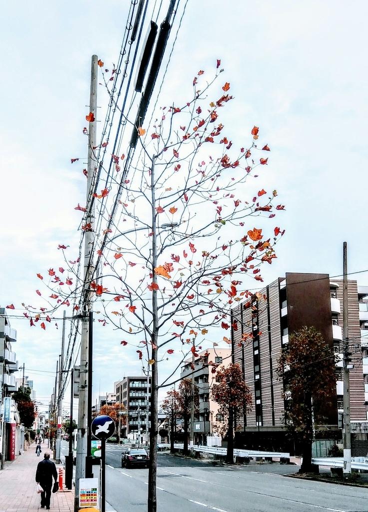 f:id:chihonakajima:20181122111906j:plain