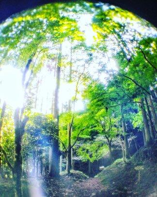 f:id:chihonakajima:20181204115942j:plain