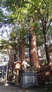 f:id:chihonakajima:20200419095859j:plain