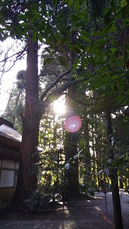 f:id:chihonakajima:20200419100010j:plain