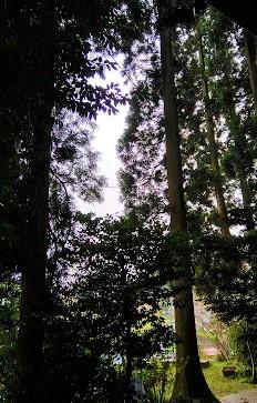 f:id:chihonakajima:20200521082819j:plain