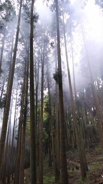 f:id:chihonakajima:20200521082905j:plain