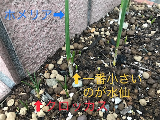 f:id:chiidax:20180110164712j:image