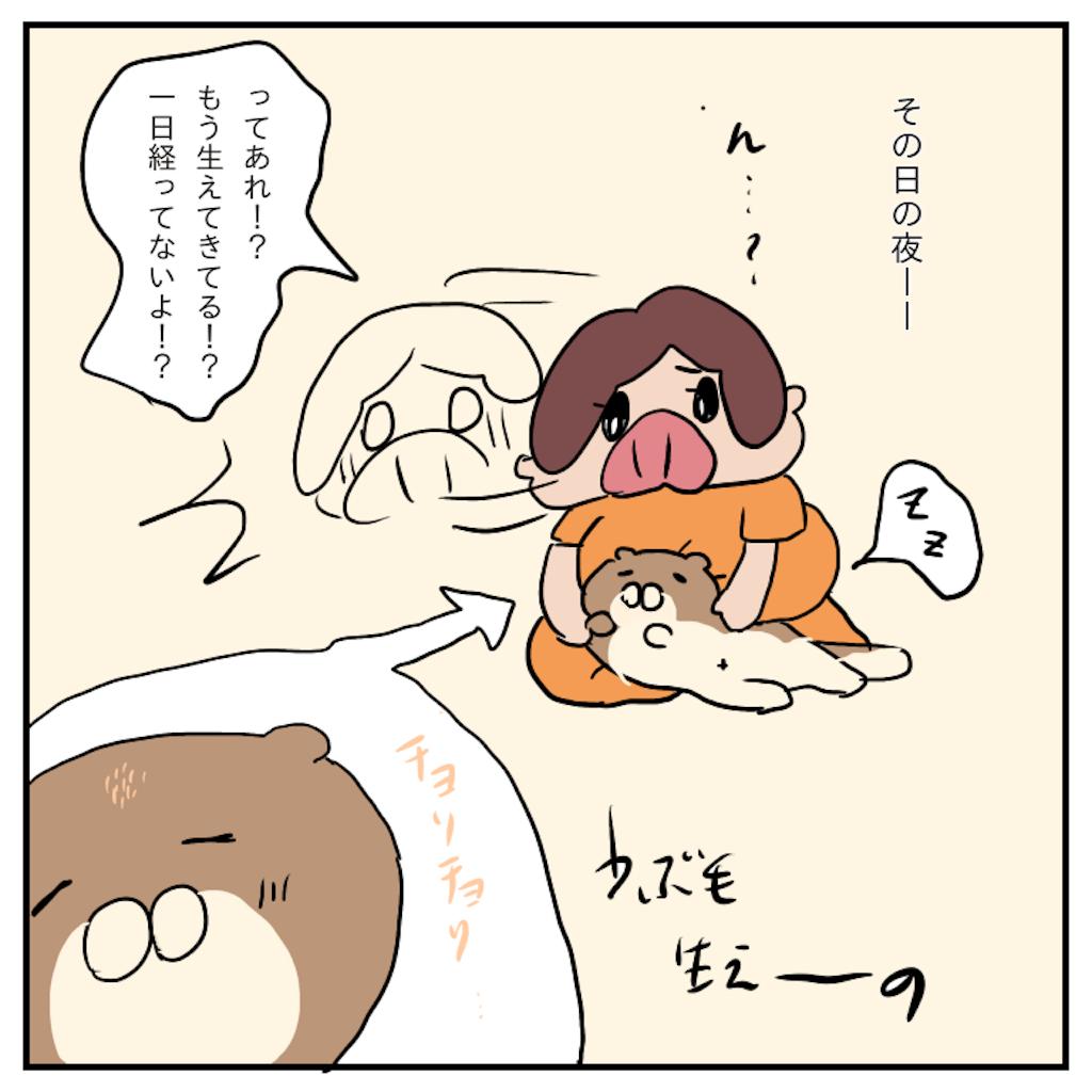 f:id:chiisakiobu:20191114004606p:image