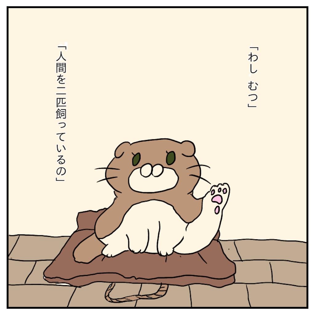 f:id:chiisakiobu:20191119221743p:image
