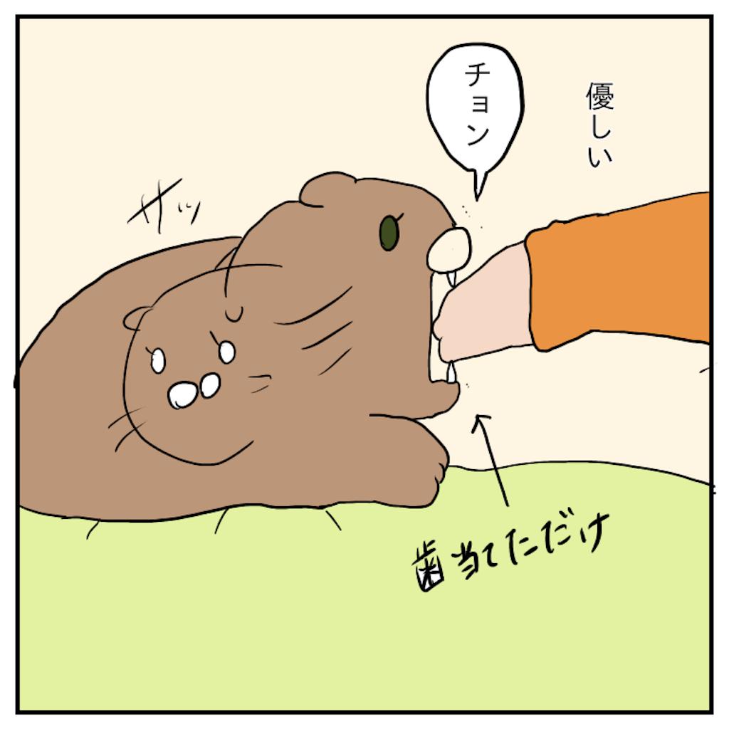 f:id:chiisakiobu:20191120230527p:image