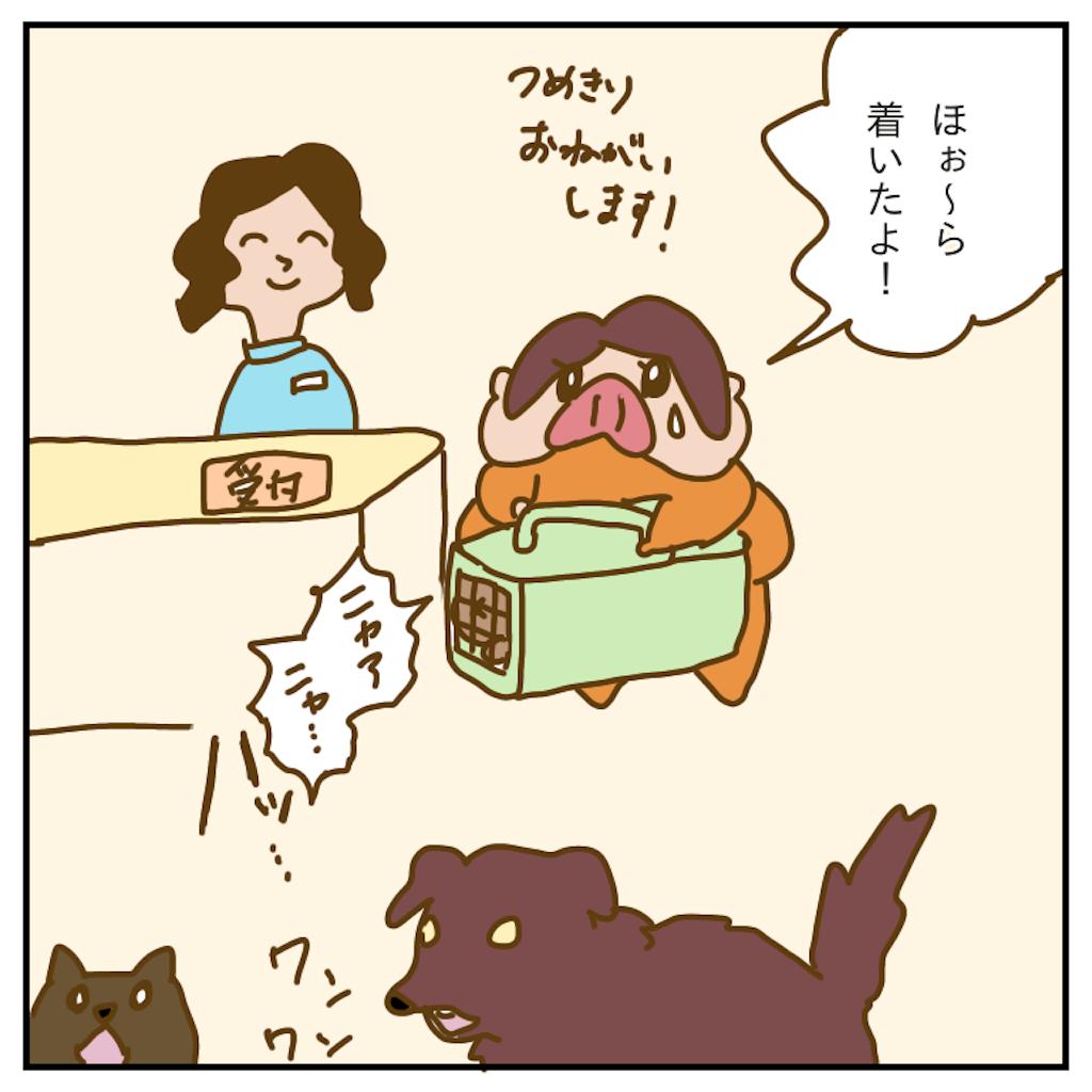 f:id:chiisakiobu:20191212214159p:image