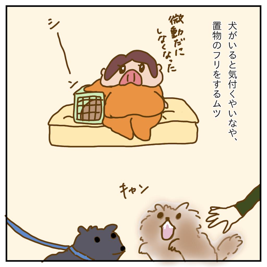 f:id:chiisakiobu:20191212214206p:image