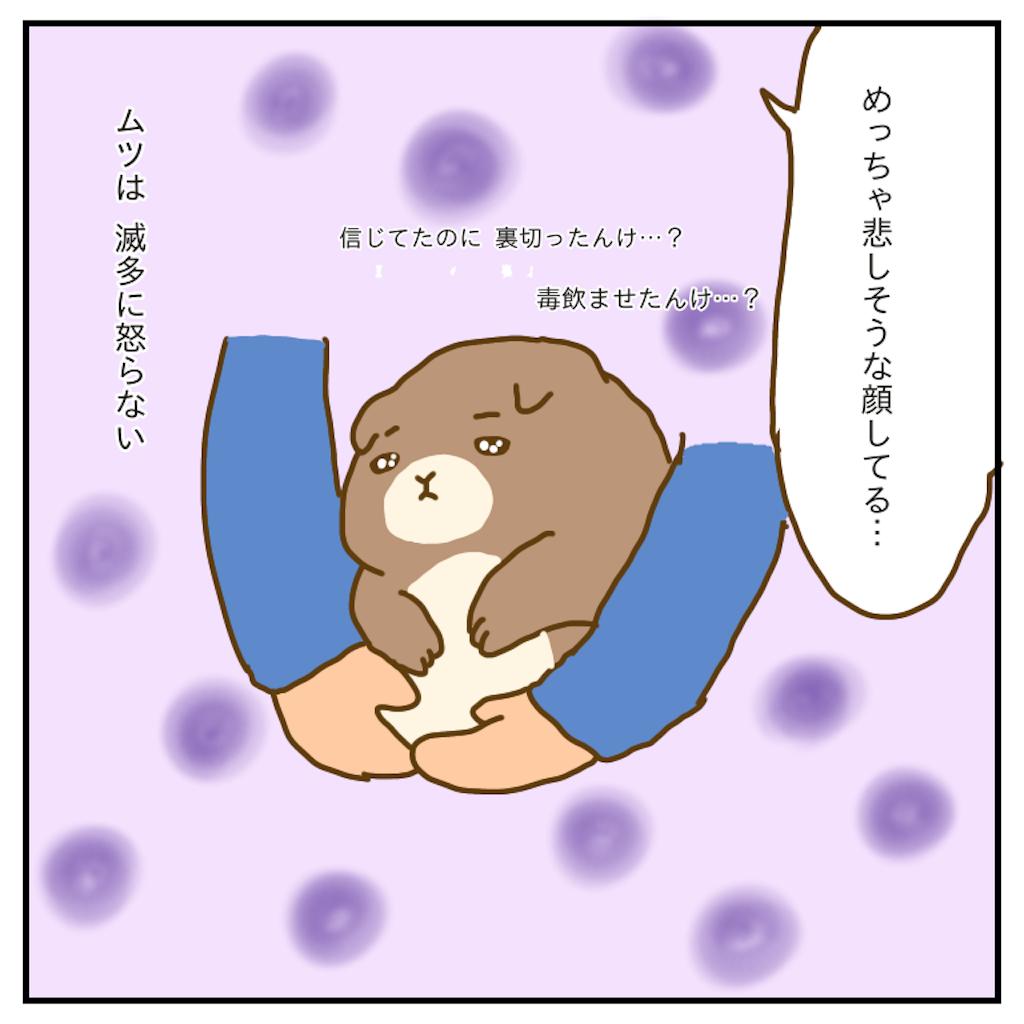f:id:chiisakiobu:20200103230036p:image