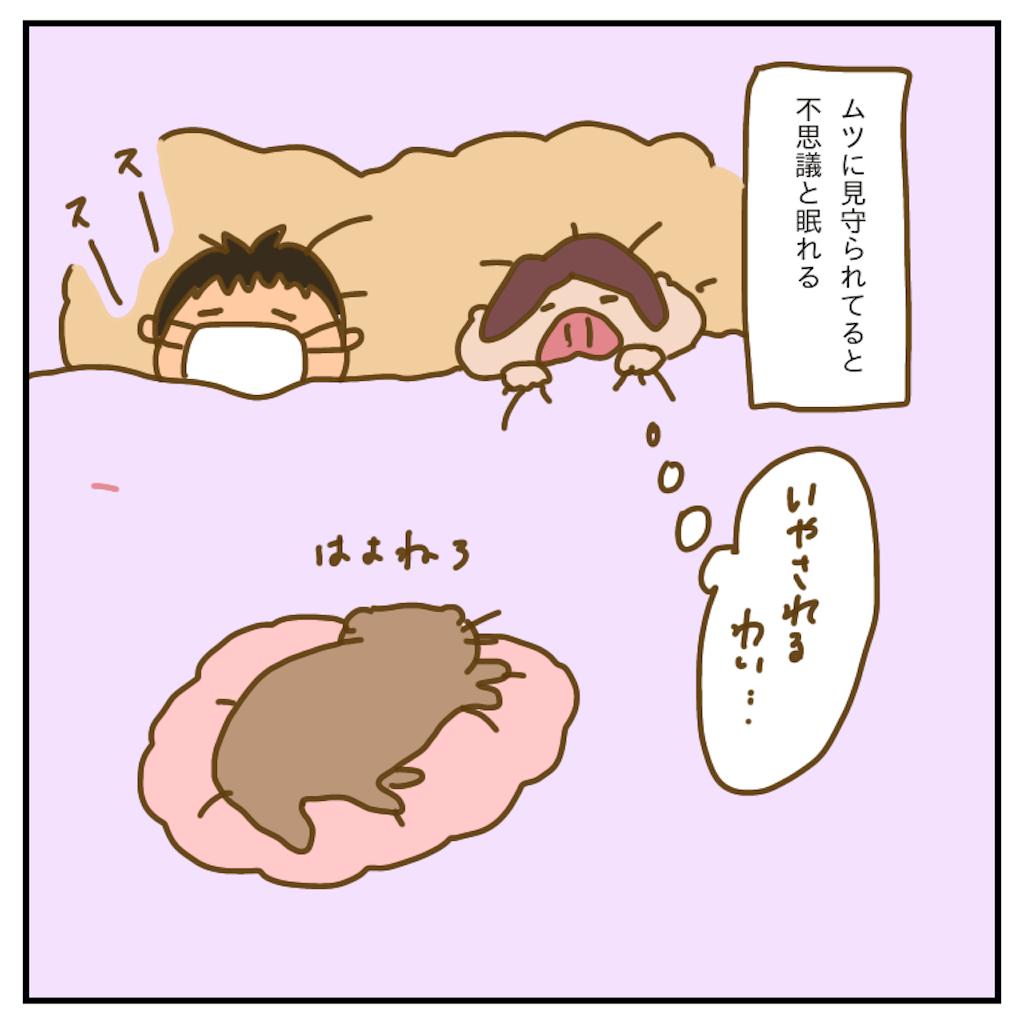 f:id:chiisakiobu:20200205234752p:image