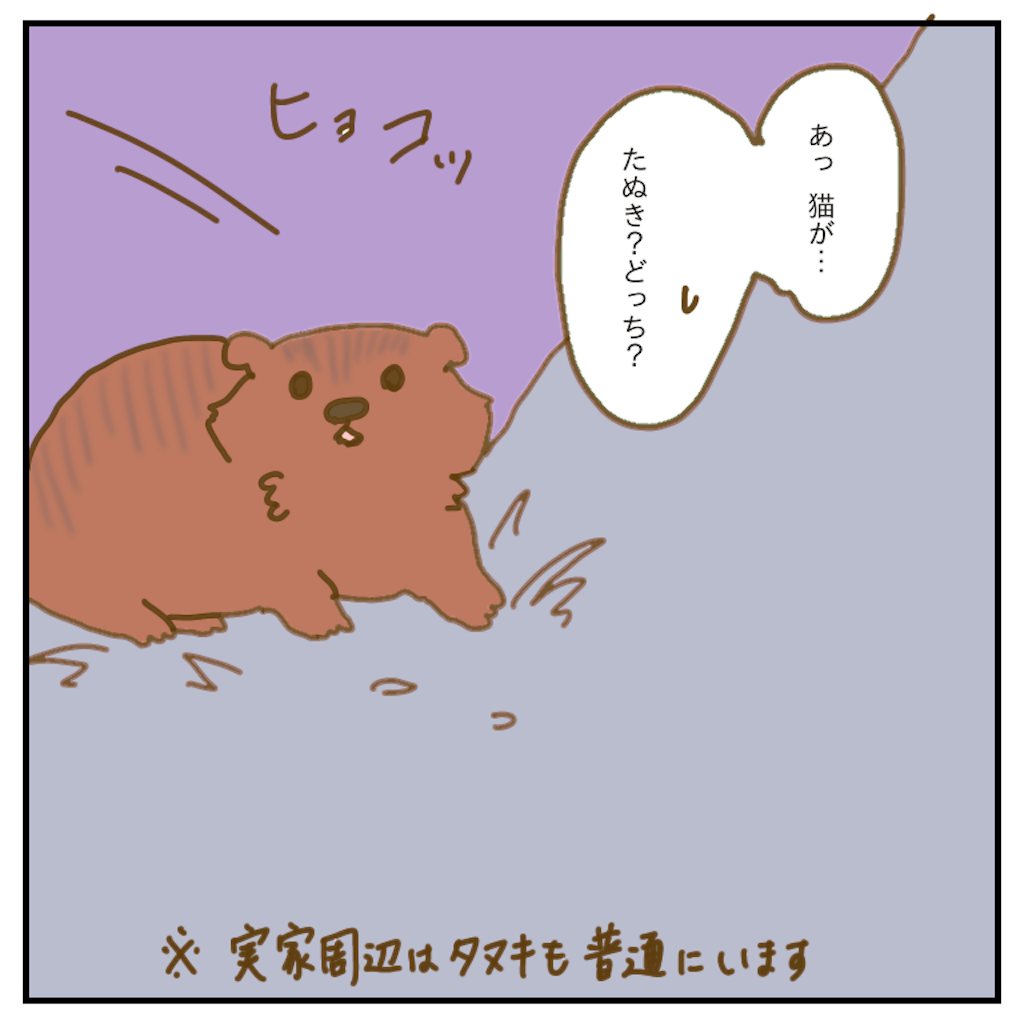 f:id:chiisakiobu:20200206205950p:image