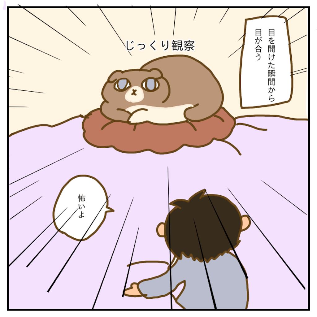 f:id:chiisakiobu:20200301224236p:image