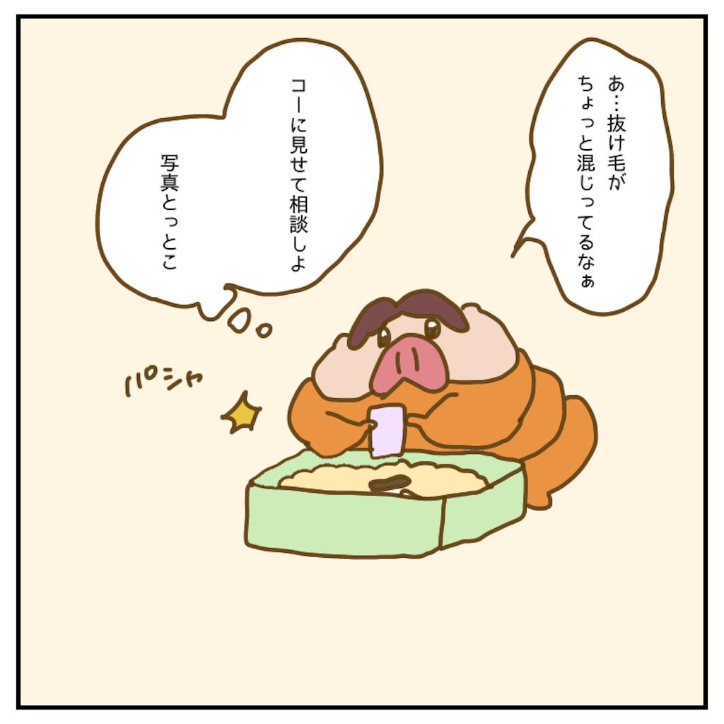f:id:chiisakiobu:20200610222331p:image