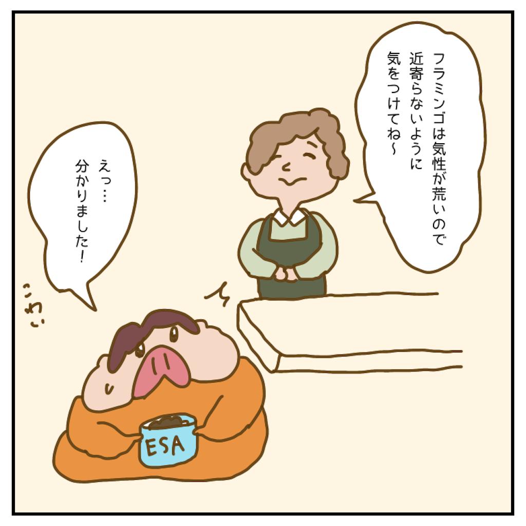 f:id:chiisakiobu:20200707084509p:image