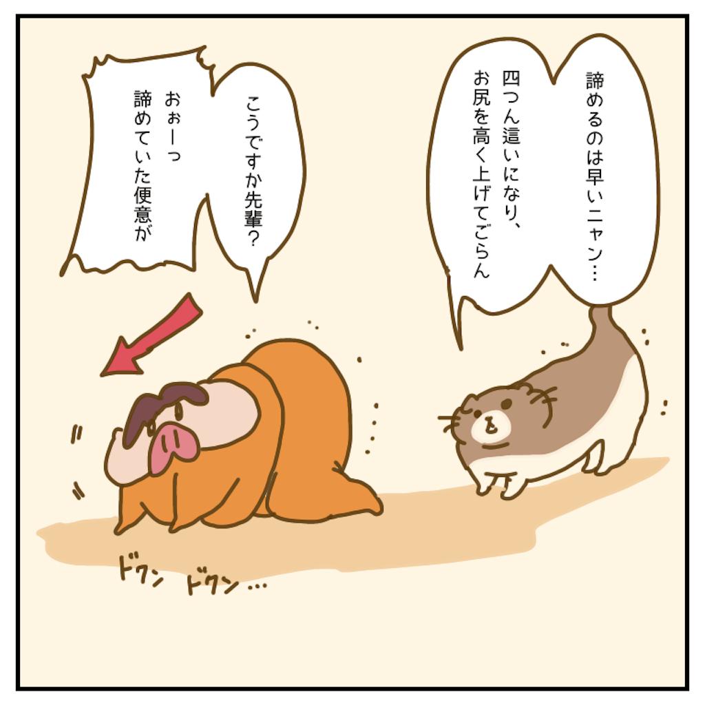 f:id:chiisakiobu:20200903223148p:image