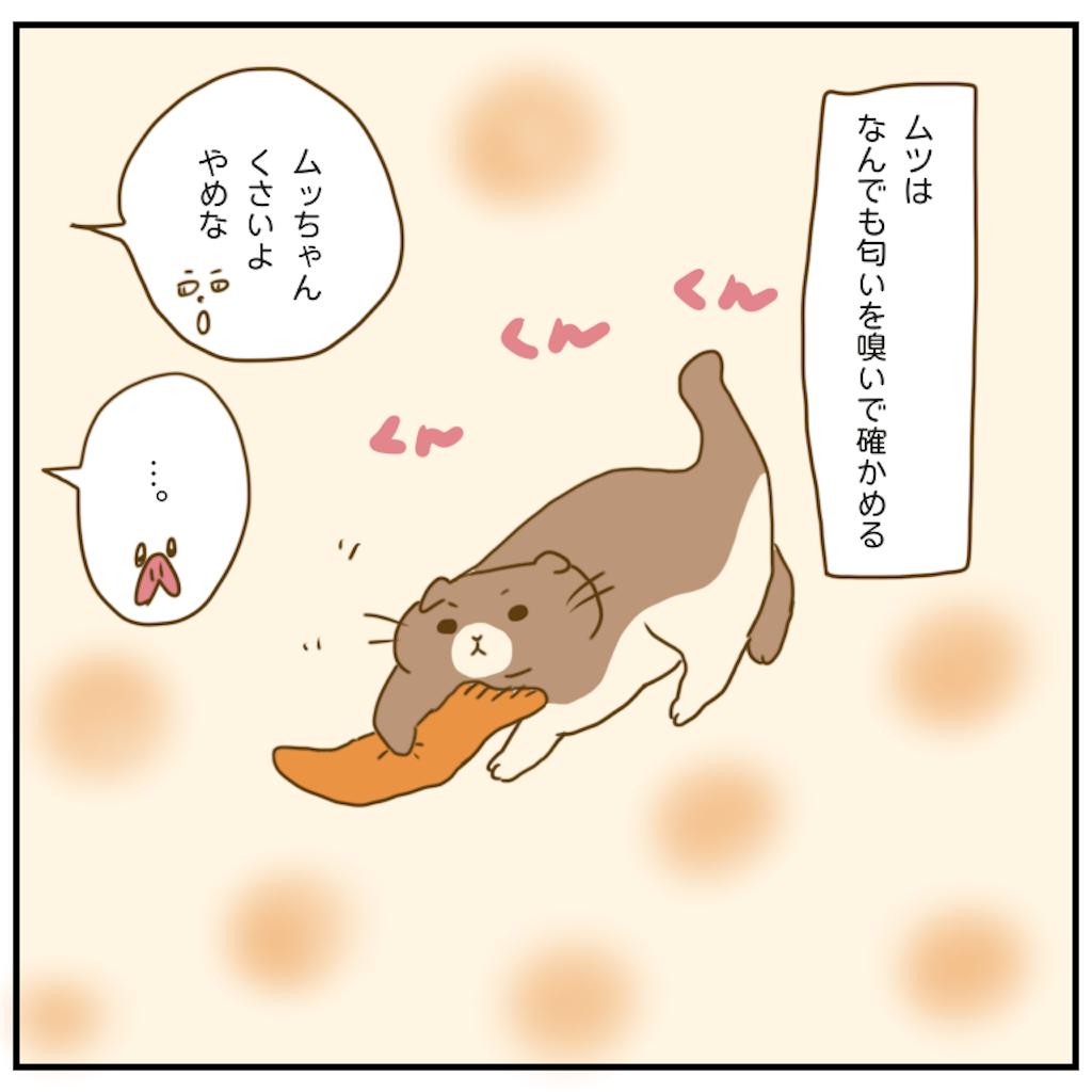 f:id:chiisakiobu:20201116203522p:image