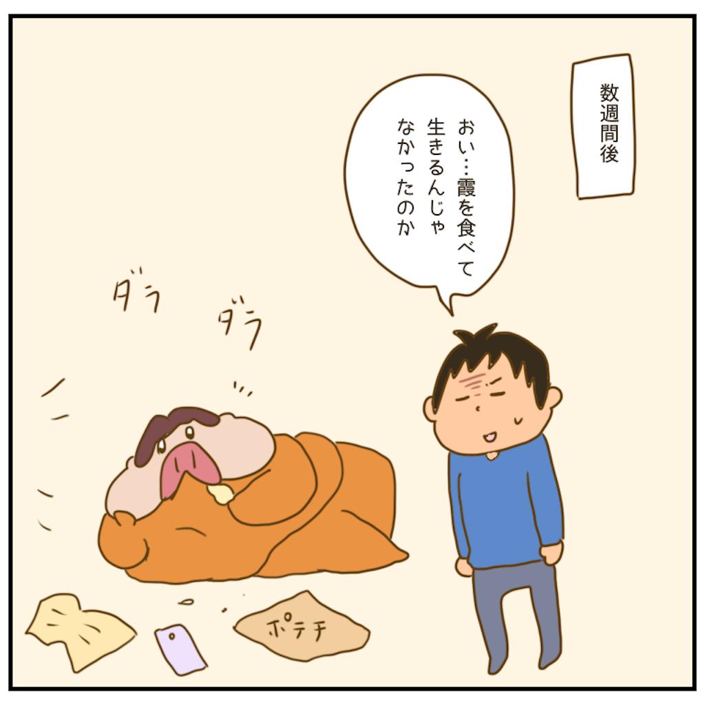 f:id:chiisakiobu:20201209221316p:image