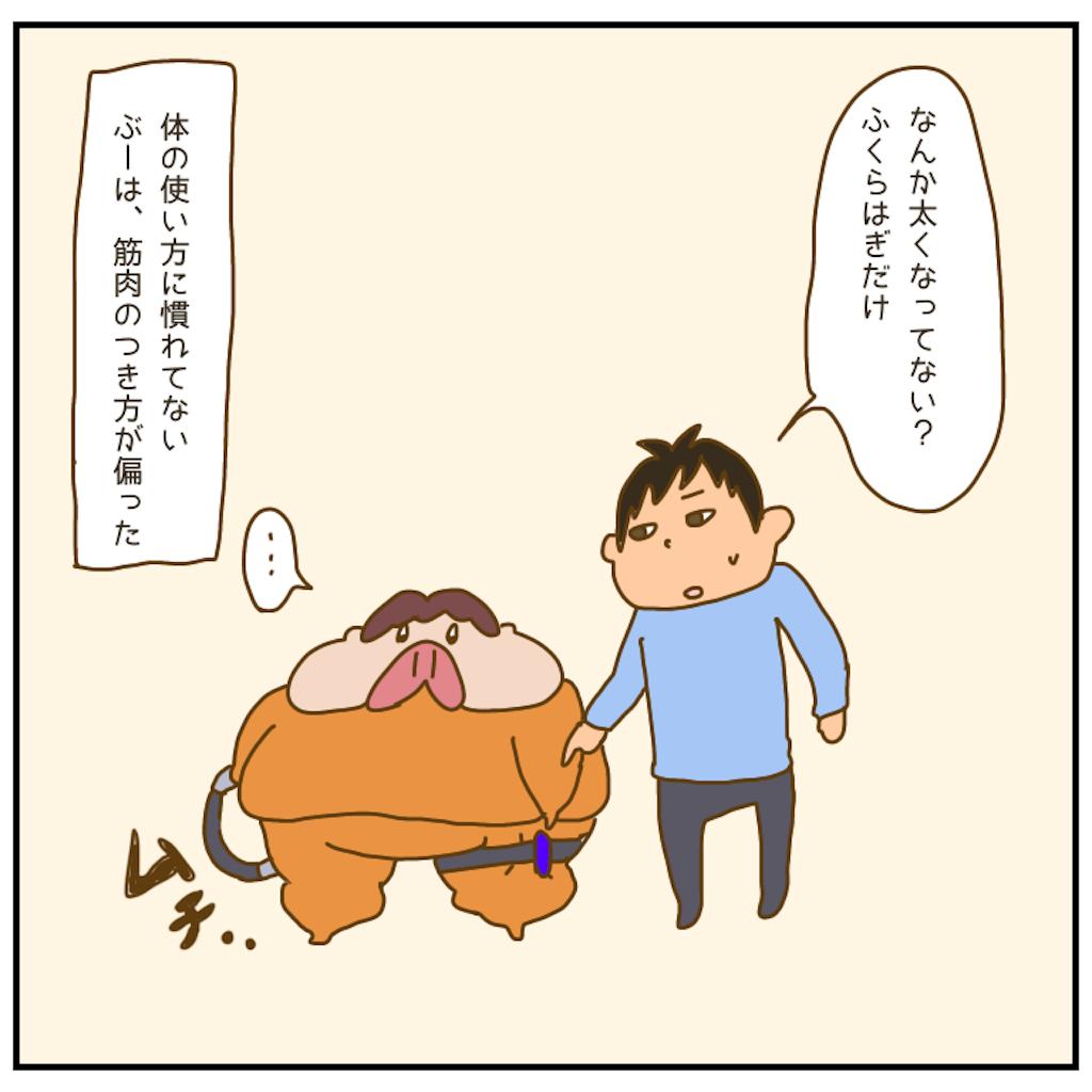 f:id:chiisakiobu:20201215204756p:image