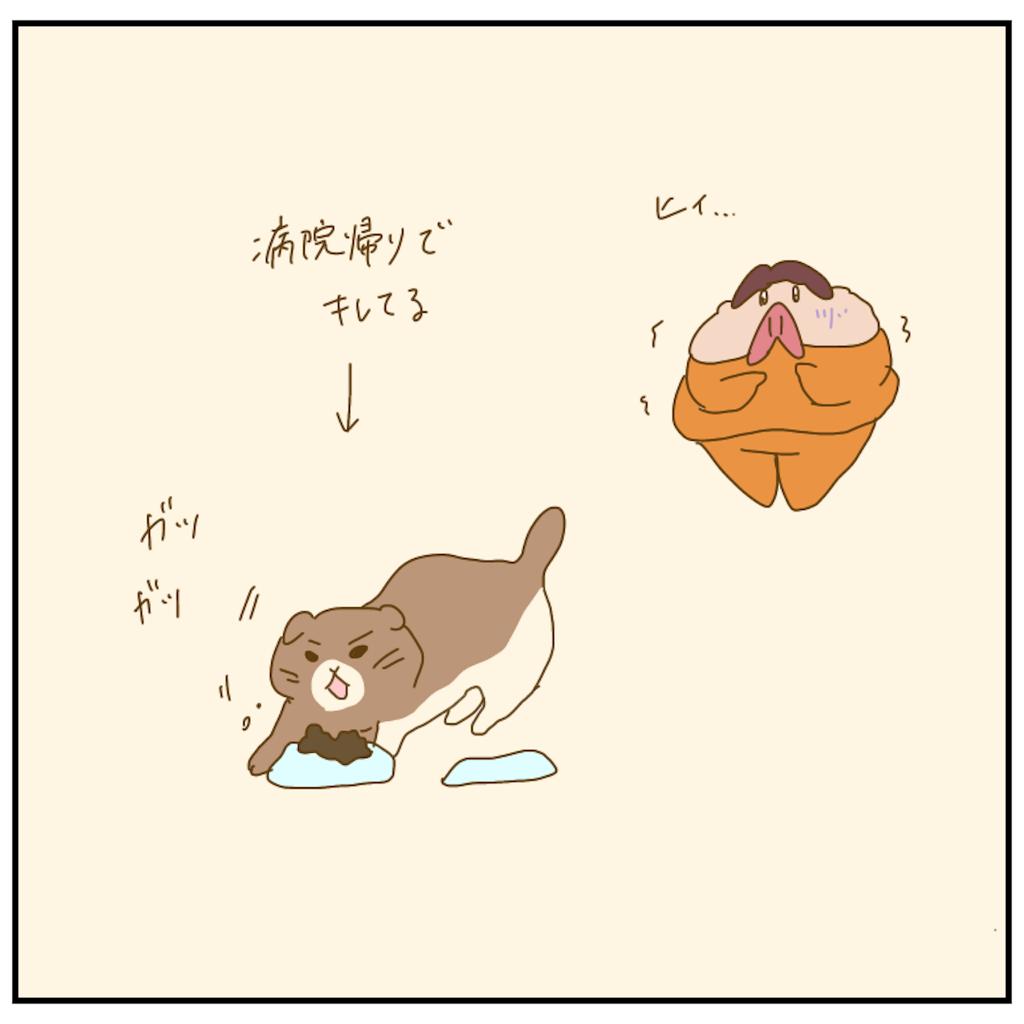 f:id:chiisakiobu:20210509223148p:image