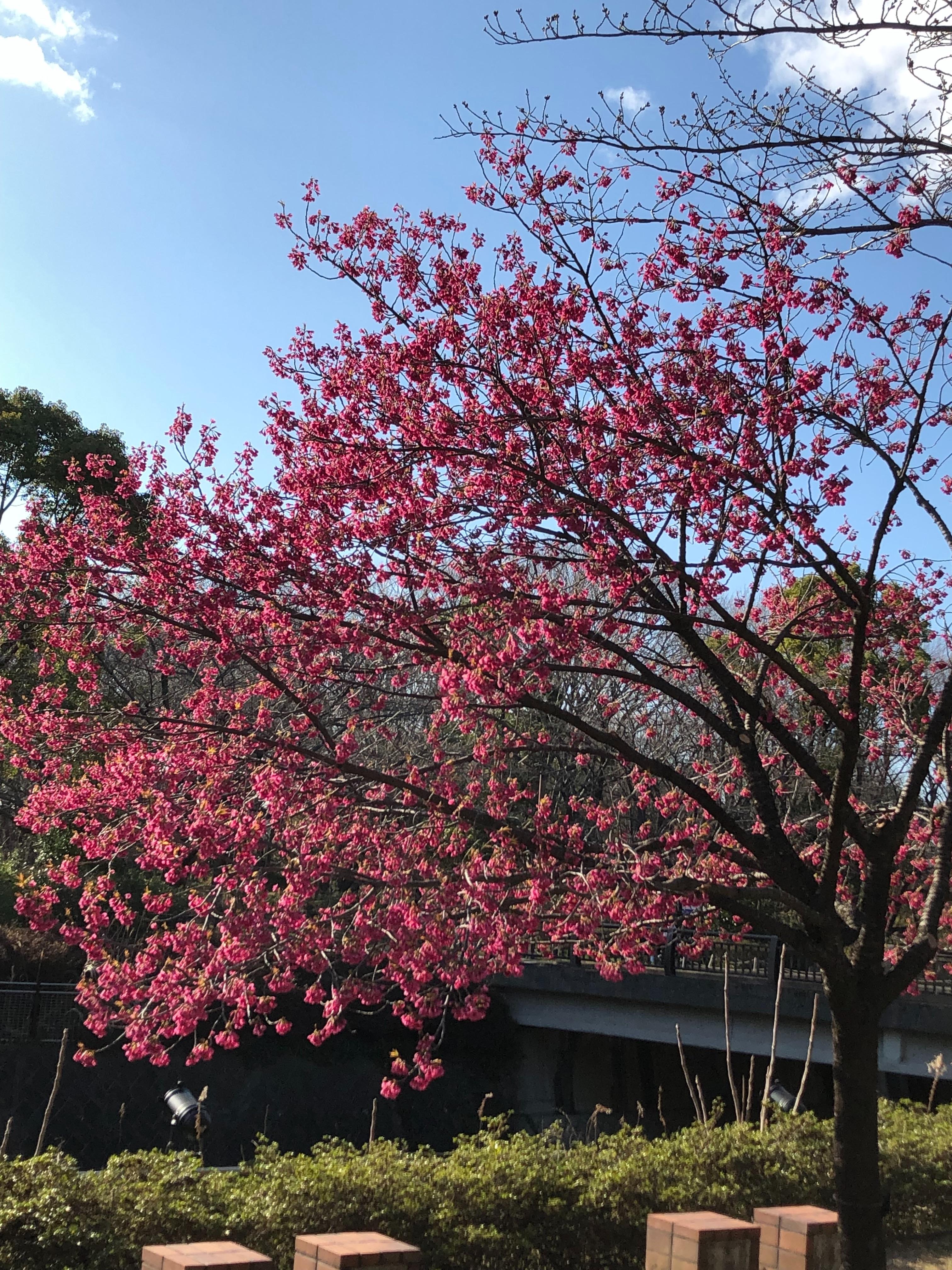 f:id:chiisanatenohira:20190325212035j:image