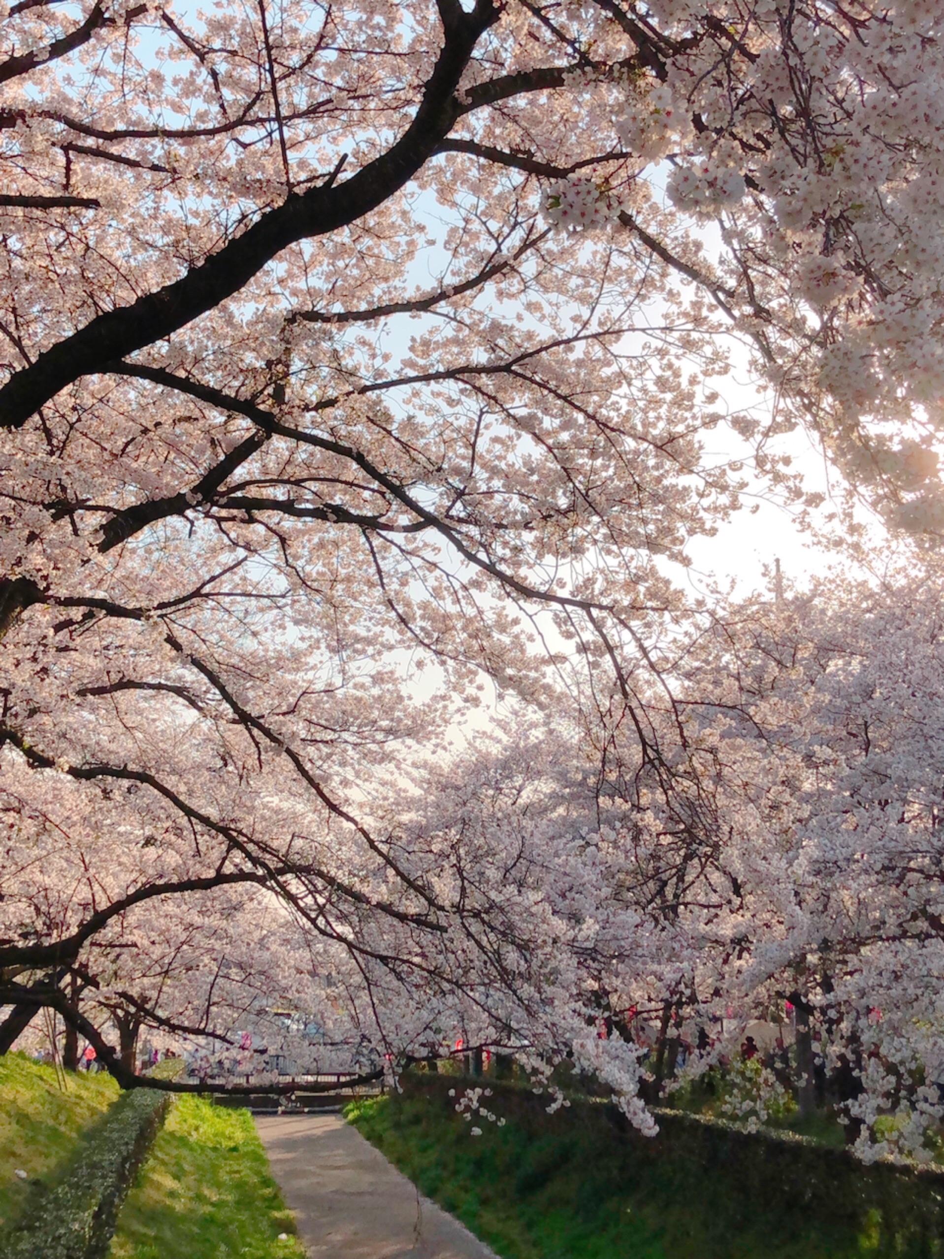 f:id:chiisanatenohira:20190408171638j:image