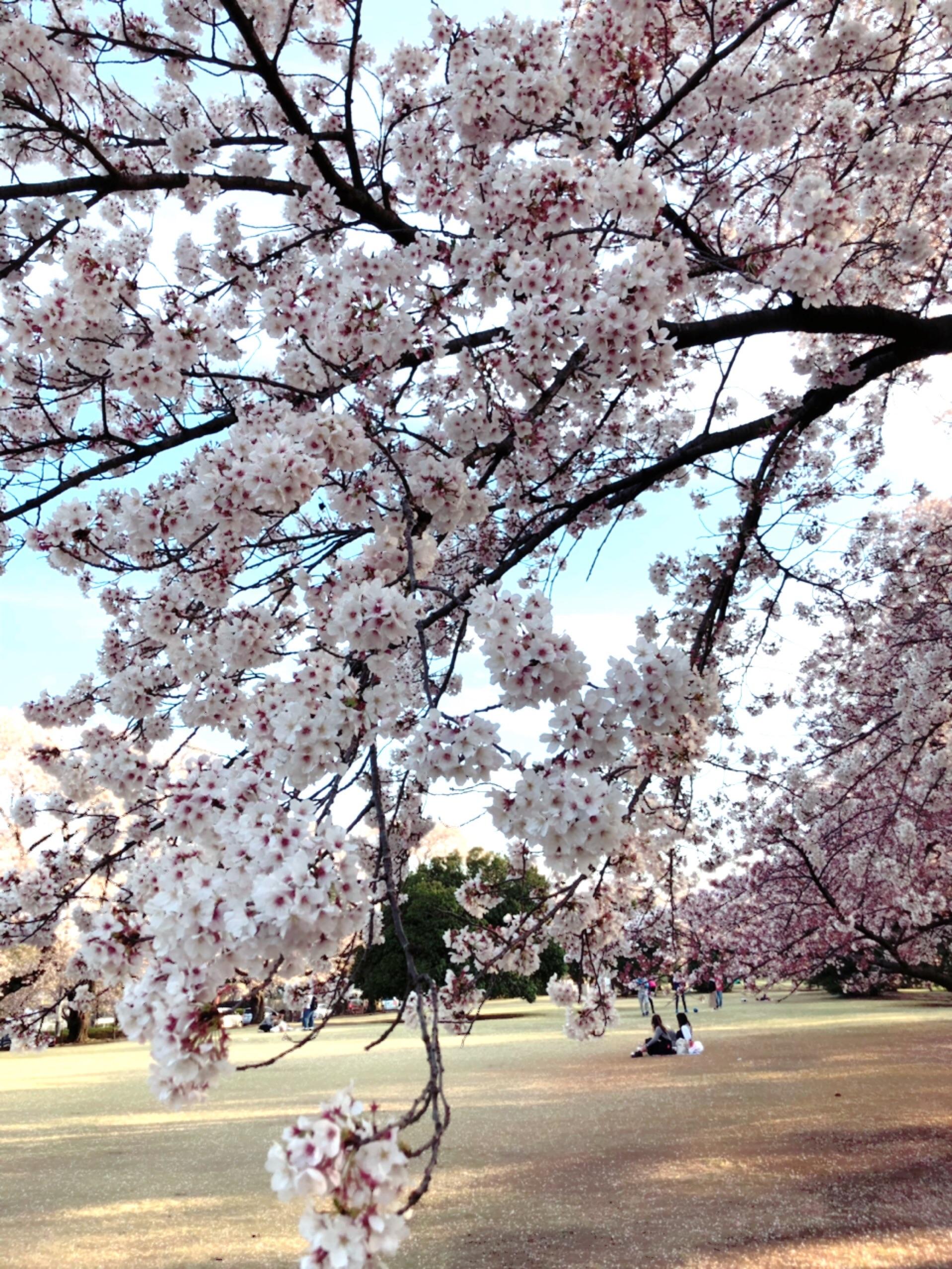 f:id:chiisanatenohira:20190414101032j:image