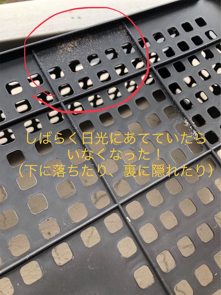 f:id:chiiwaka:20190722162005j:image