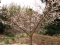 春の訪れ3