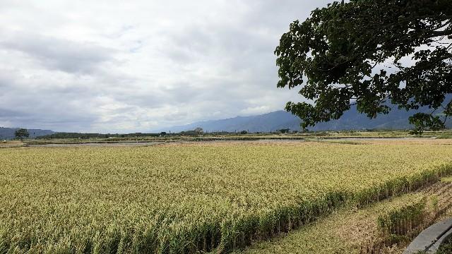 f:id:chikanomi:20201124095124j:image