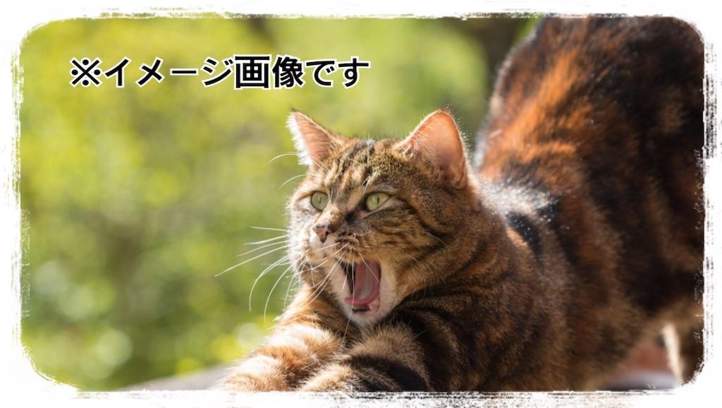 f:id:chiki-no3:20190304185450j:image