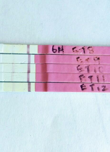 排卵検査薬 フライング