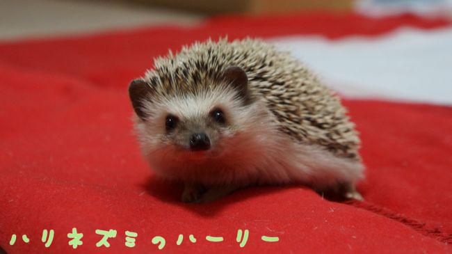 f:id:chikojirou:20150410213318j:plain