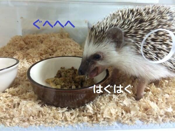 f:id:chikojirou:20150410213950j:plain