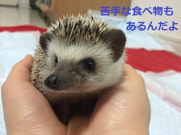 f:id:chikojirou:20150410215757j:plain