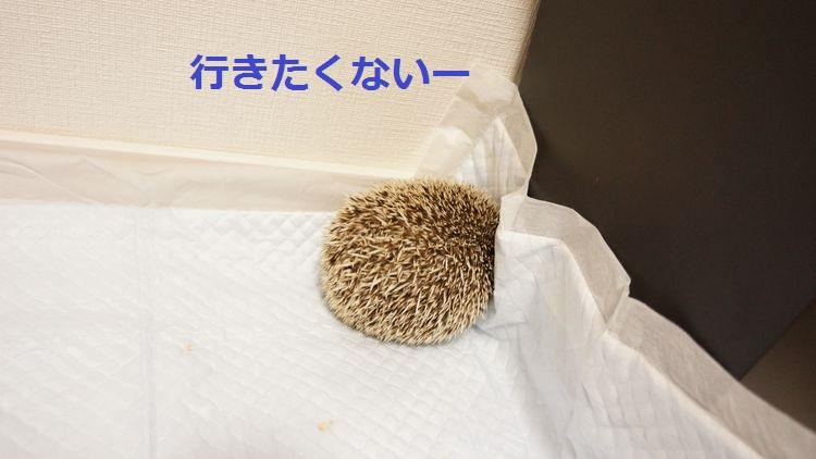 f:id:chikojirou:20150429201515j:plain