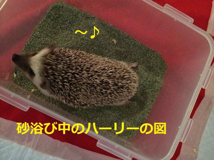 f:id:chikojirou:20150429205947j:plain