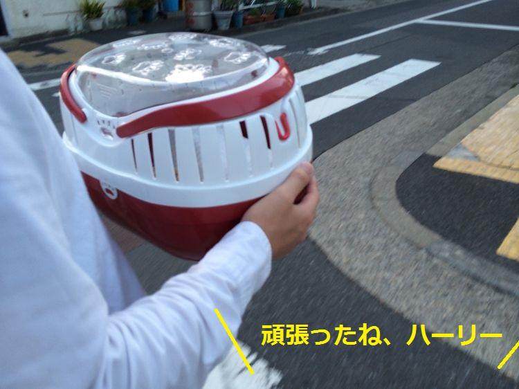 f:id:chikojirou:20150429213045j:plain