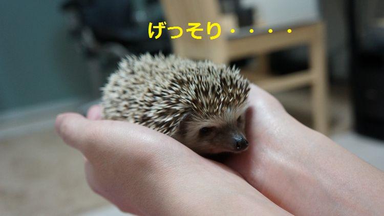 f:id:chikojirou:20150429213318j:plain