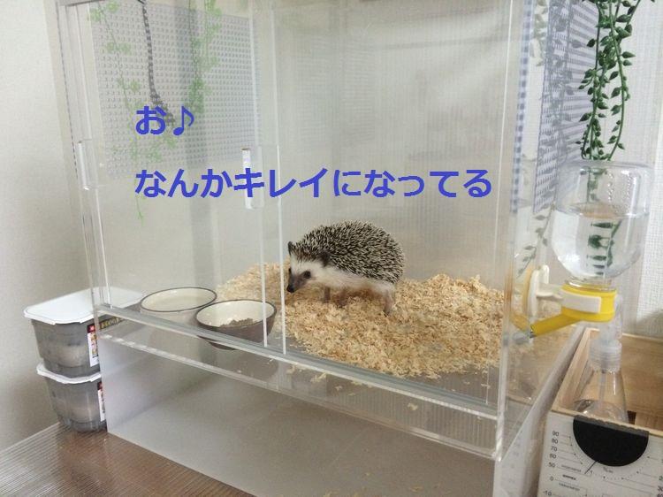f:id:chikojirou:20150518202721j:plain