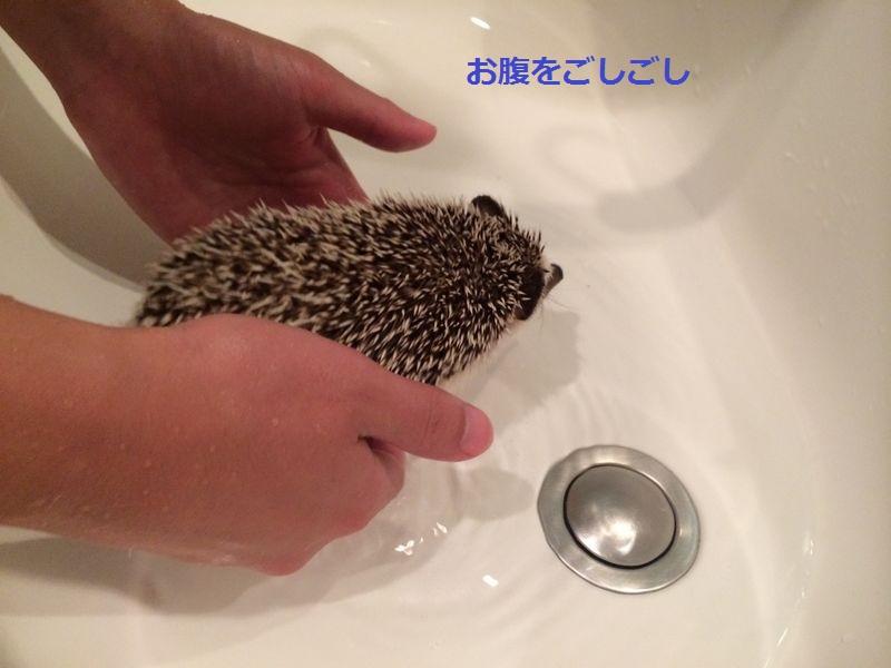 f:id:chikojirou:20150718222141j:plain