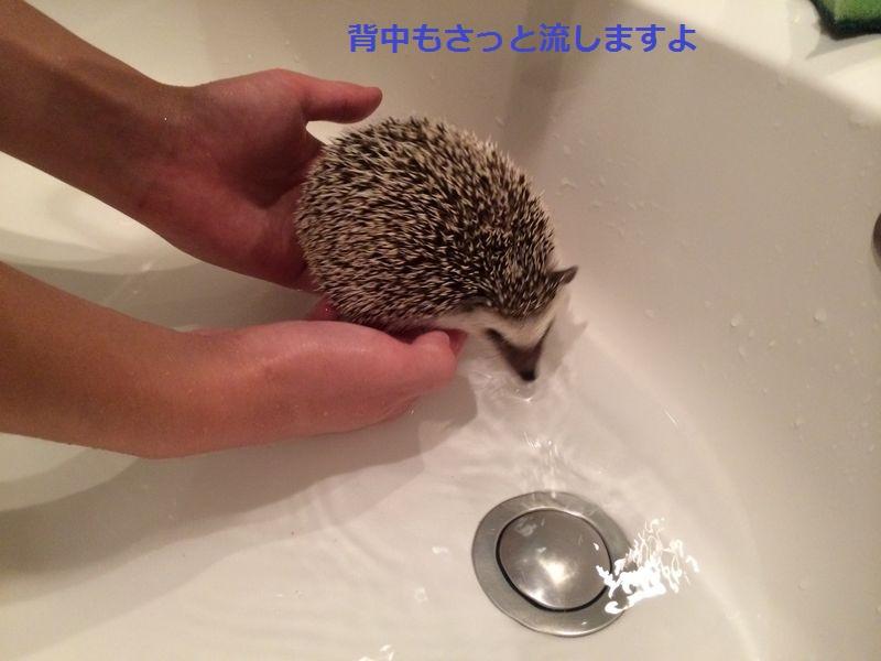 f:id:chikojirou:20150718222258j:plain